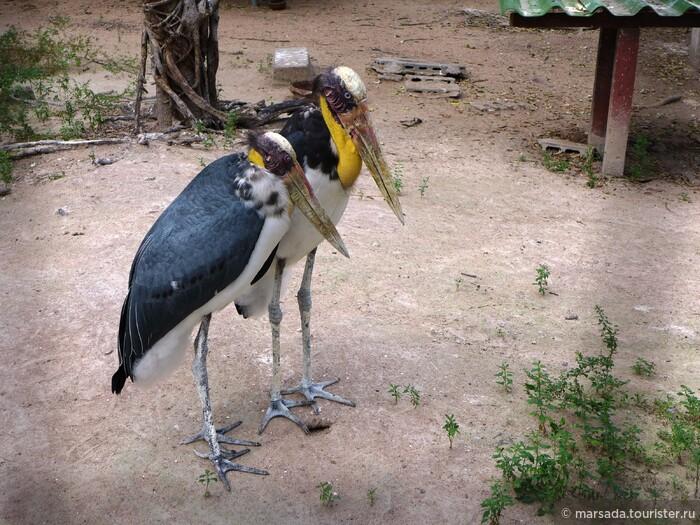 Центр по разведению диких животных