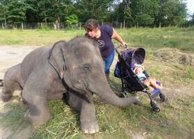 а потом начались лобызания) - мне кажется, или слоненок улыбается ?