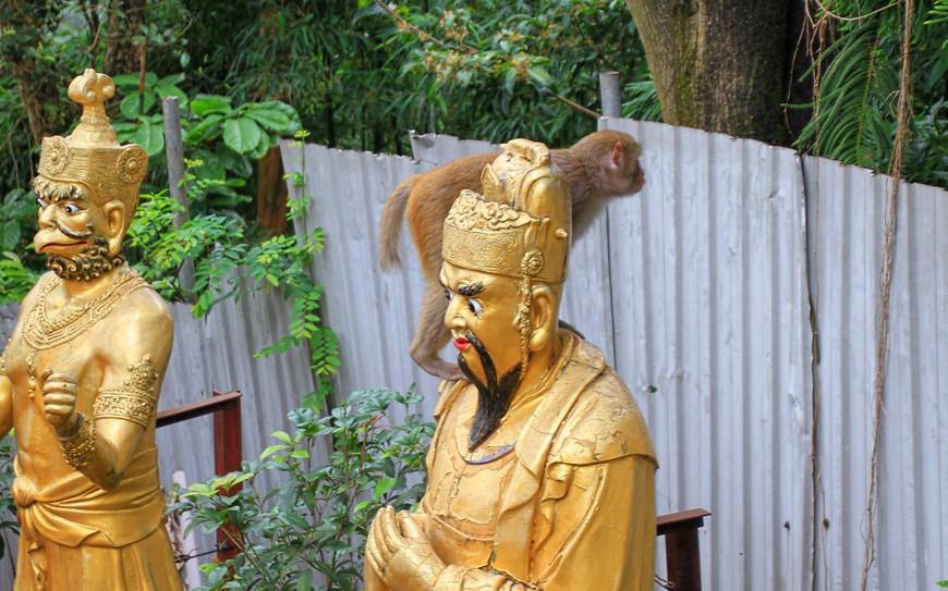 Обезьяны почтения к Буддам не имеют и нагло используют их головы в качестве трамплина для прыжка.