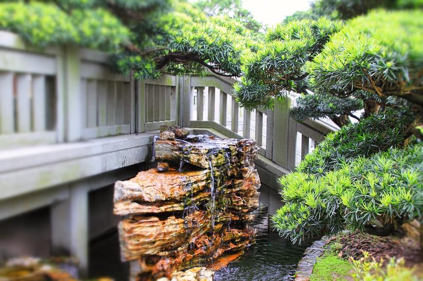 Обилие воды влажную жару пережить не помогало. Ветер совершенно сникал в гонконгских садах, и душная влажность совершенно лишала сил ходить. Зато смотреть и любоваться было удобно!