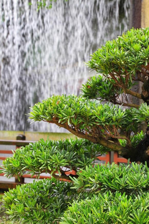 Водопадики - обязательное украшение гонконгских парков.