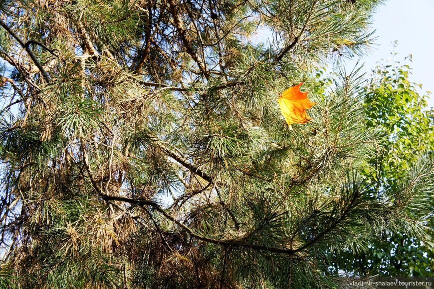 """""""Осенний лист, подкрашенный кармином, ещё он помнит летние деньки…"""""""