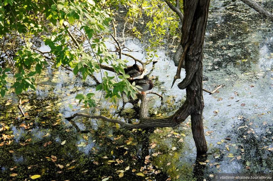 """""""Закружила листья на воде осень сероглазая, вздыхая..."""""""