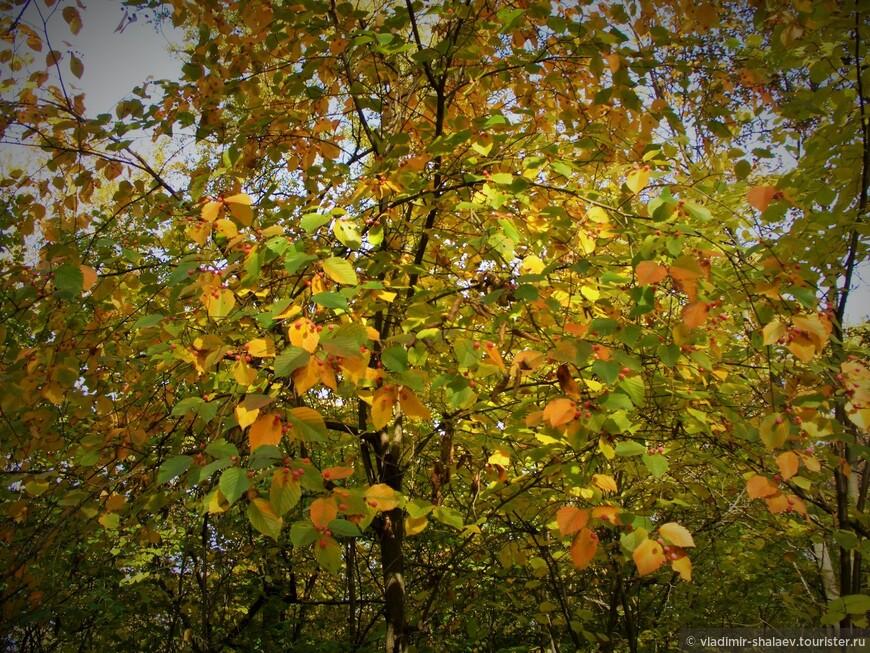 """""""Сыплется с неба листва, кувыркаясь, с шелестом мягким к земле прикасаясь."""""""