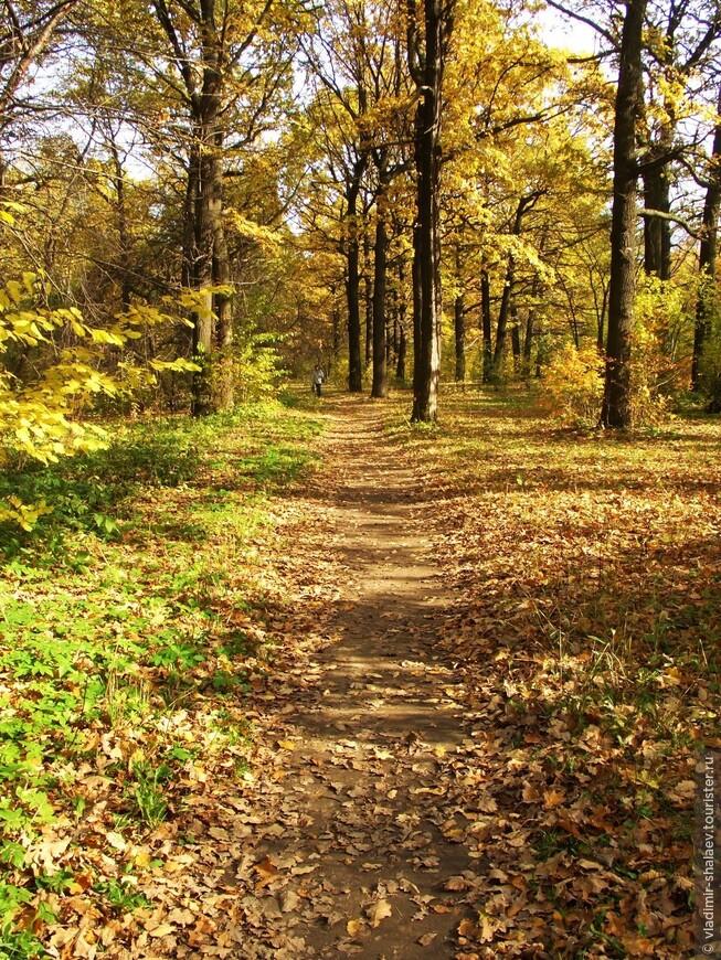 """""""На деревьях листьев мало. На земле — невпроворот. Из лоскутьев одеяло на прощанье осень шьёт."""""""
