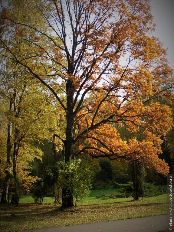 """""""Печально солнце льёт остатки света среди внезапной, зябкой тишины... Осенняя палитра многоцветна, — в ней не хватает только белизны""""."""