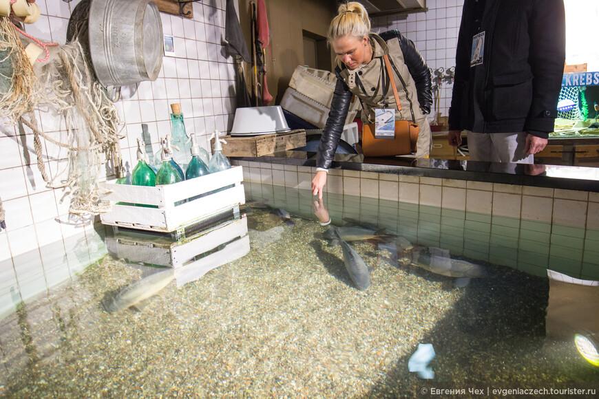 А в аквариуме поздороваться с рыбками