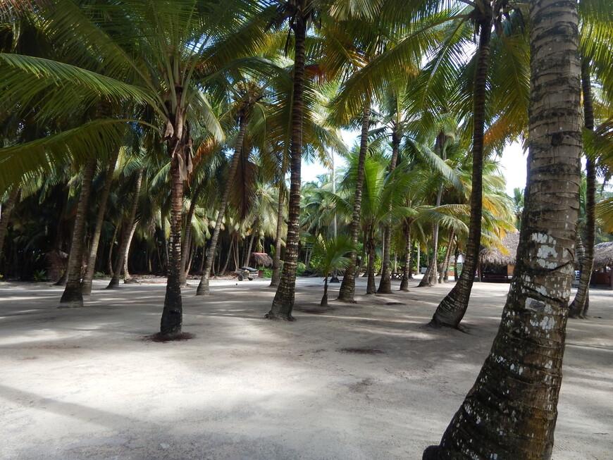 На острове есть мангровые леса и пещеры,которые тоже можно увидеть только на индивидуальной экскурсии.Никто нас никуда не водил и ничего нам не показывал.