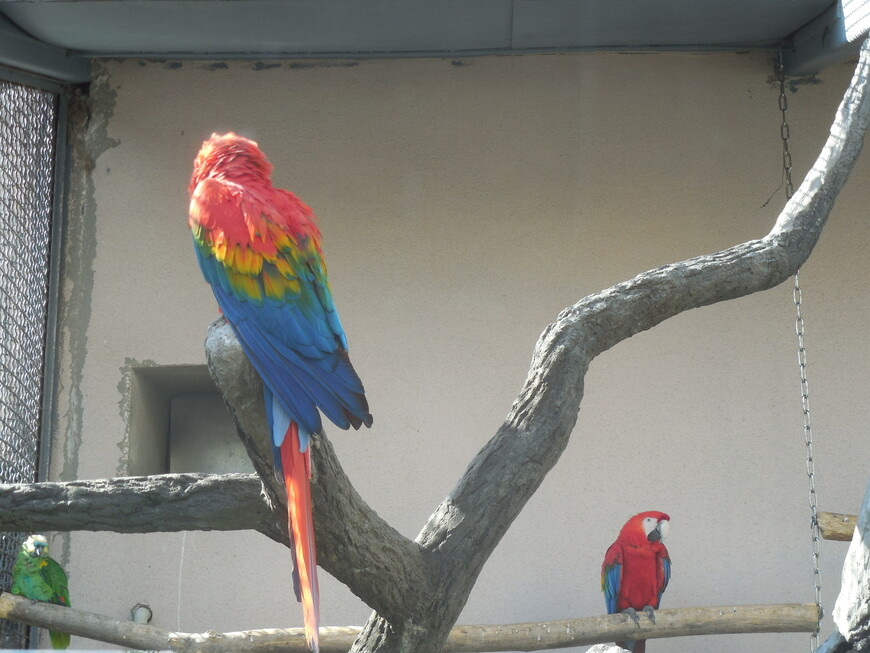 Московский зоопарк - попугай Ара