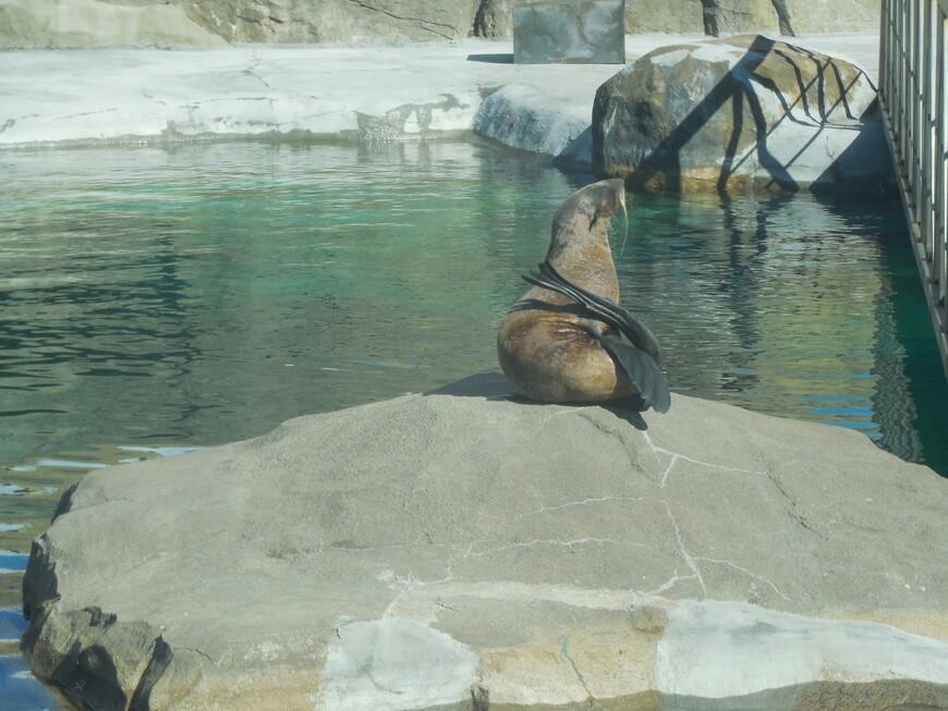 Московский зоопарк - тюлень