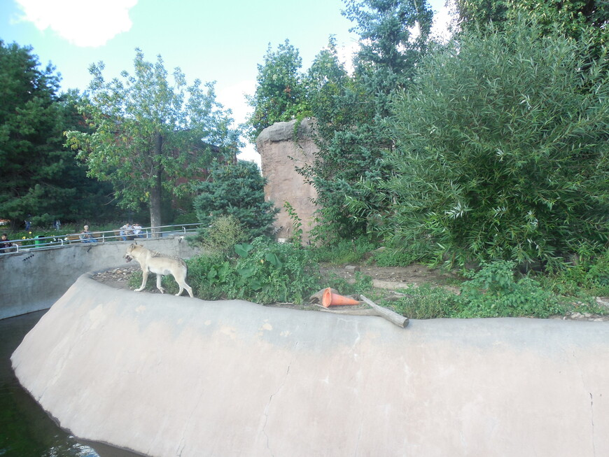 Московский зоопарк - волк
