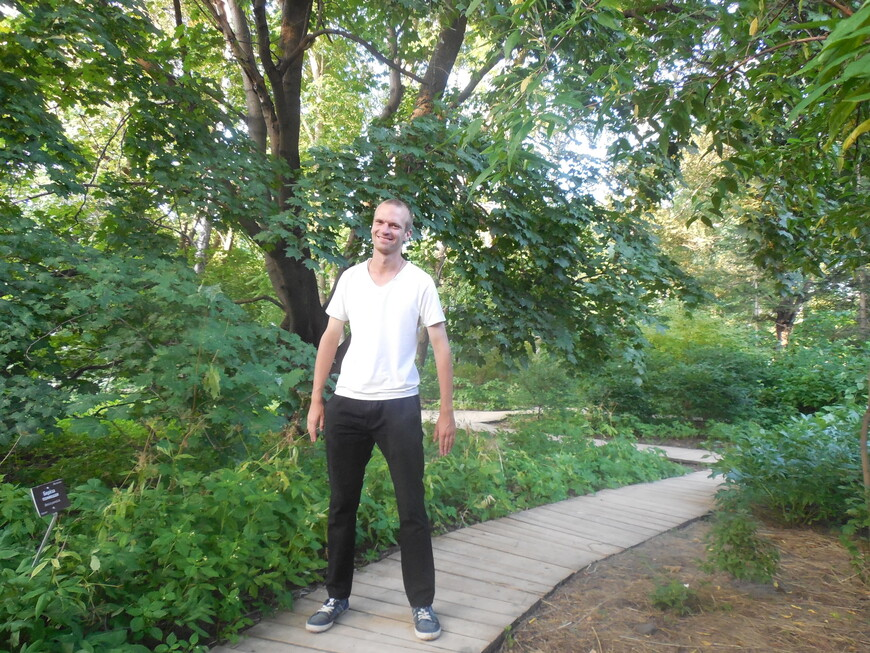 Аптекарский огород: сад хост и других травянистых многолетников