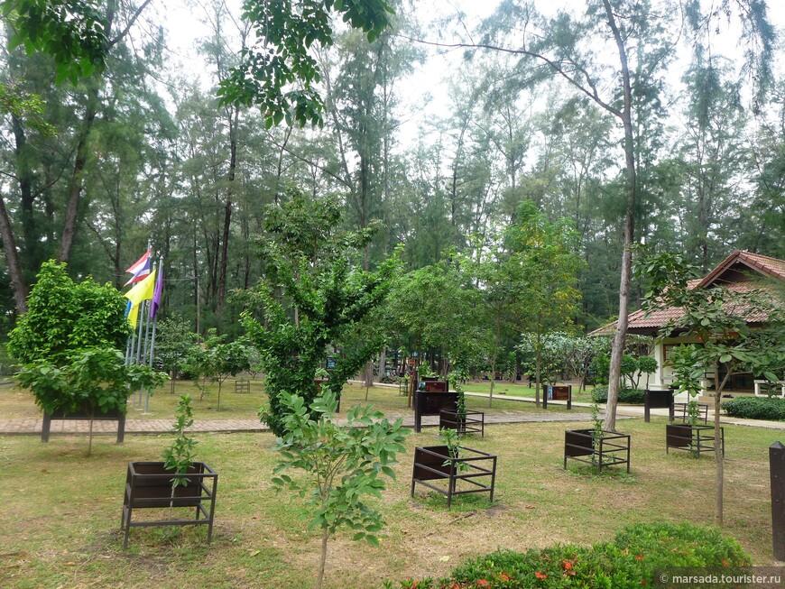 Мангровый лес в Пран Бури разделен как бы на 2 части  - прибрежную и мангровую тропу.