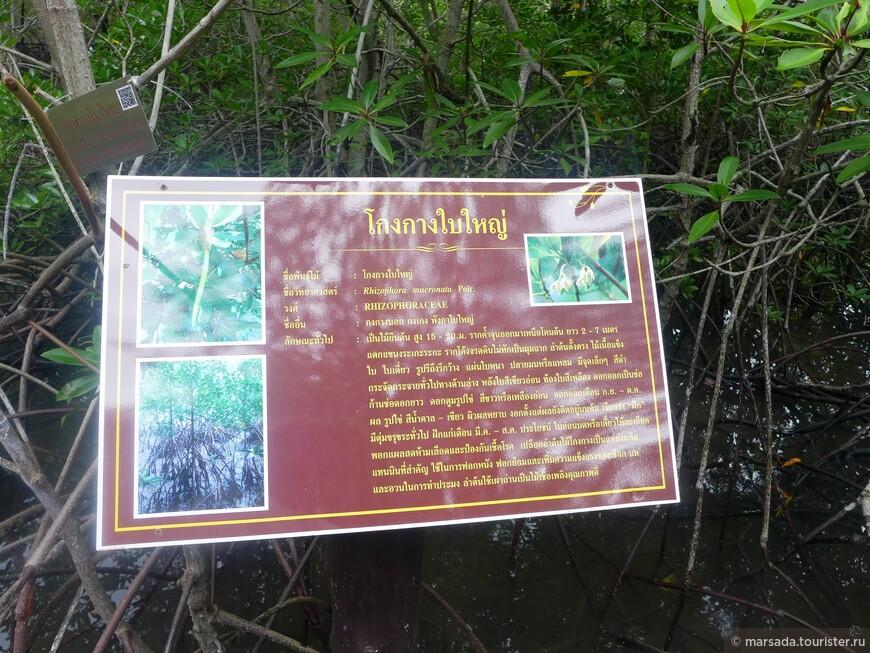 Итак, что же такое мангровые деревья???