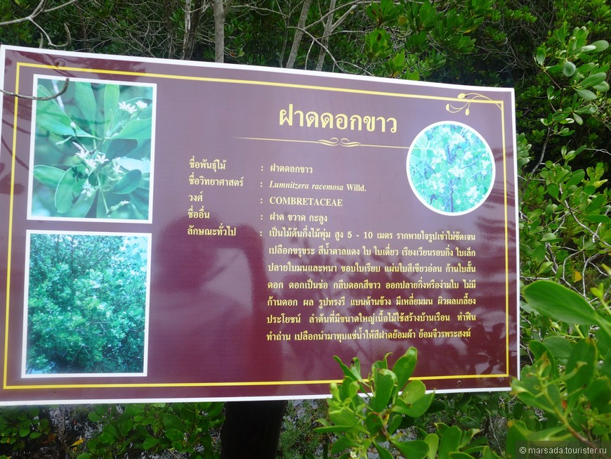 Периодически заливаемые водой, мангры поднимают над ее поверхностью только свои кроны. Одним из самых главных ограничений распространения мангров к более высоким от экватора широтам считаются холодные течения.
