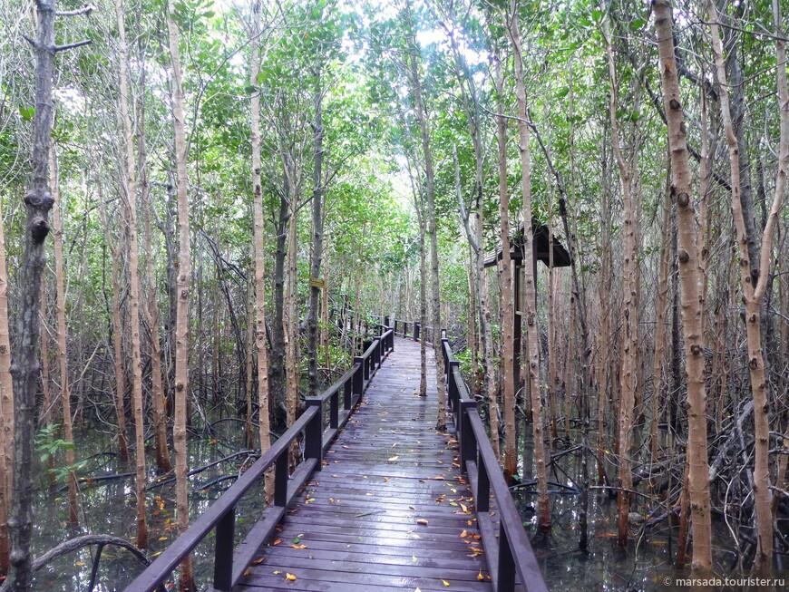 Благодаря этим деревянным тропинкам можно забраться в самые дебри, которые выглядят таинственно и сказочно. Маршрут круговой, идете сначала по одной дорожке, а вернуться можно по другой.