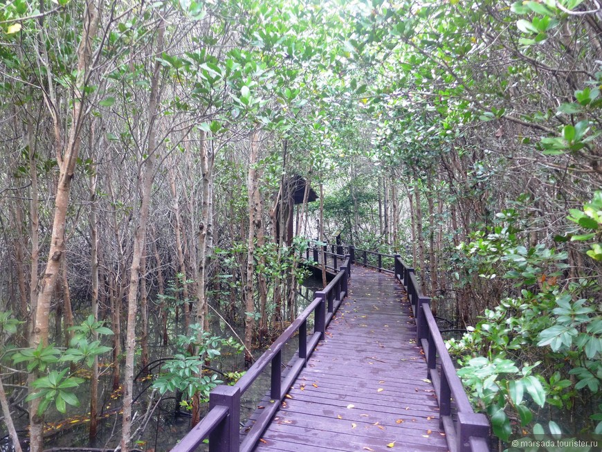 Растения, произрастающие в манграх, приспособились к уникальным условиям обитания. Прежде всего, они способны выдерживать большие показатели засоления. И относятся к солеустойчивым растениям.