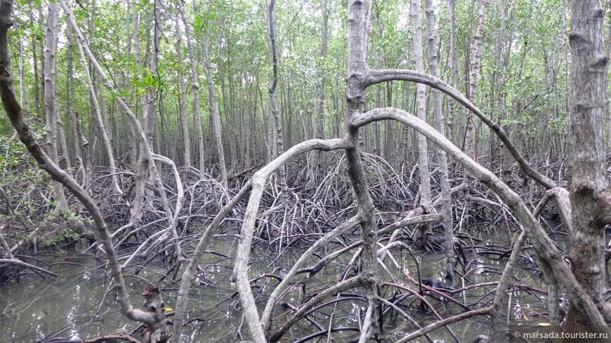 Помогает растениям и наличие ходулочных или воздушных корней.