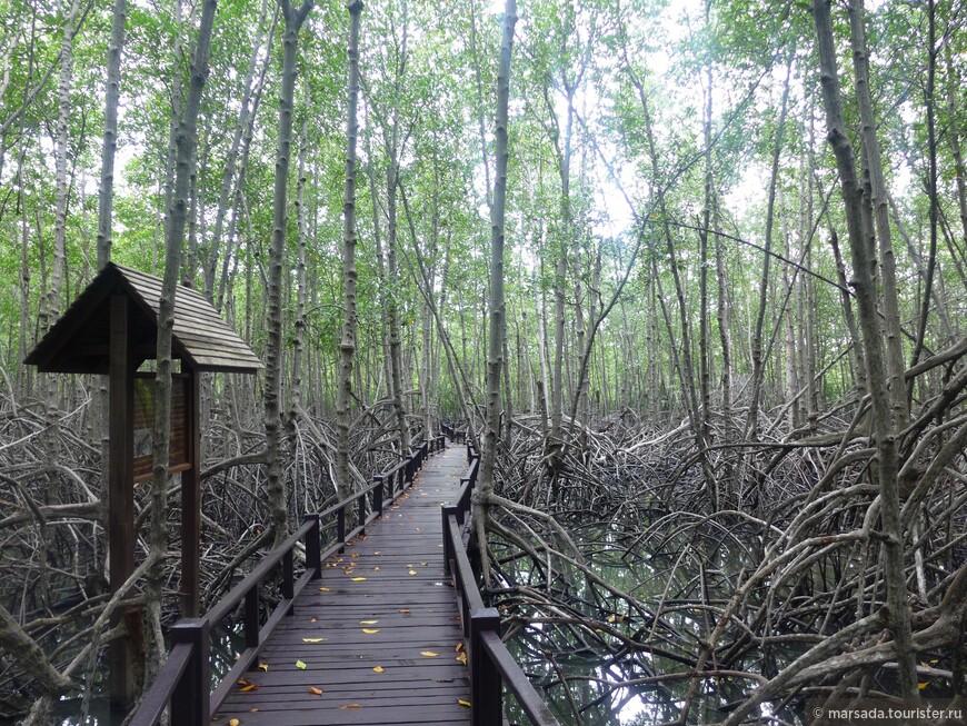 Началось всё в 1996 году, когда богатые инвесторы обнаружили, что часть земель, которые ныне занимает Pranburi Forest Park, не затапливается приливными водами, а значит этот огромный участок пригоден для земледелия.