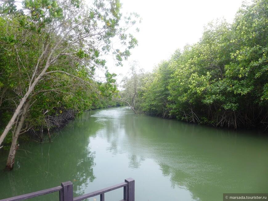 Тут можно было взять лодку и за 500 бат прокатиться час по реке сквозь мангры. Но это аттракцион не для людей с младенцами и колясками. Лодка - это очень гордое название))) Деревянная крошечная табакерка)))