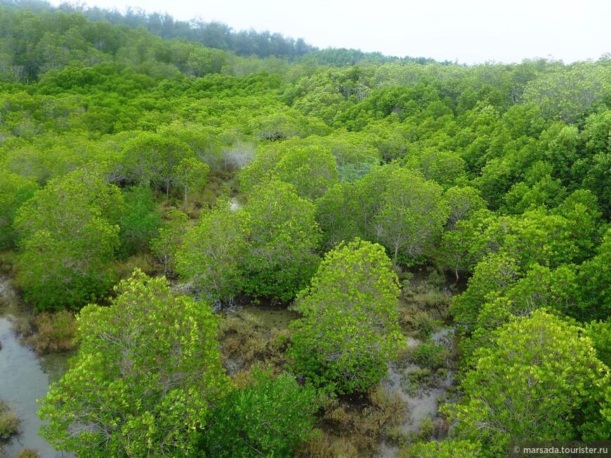 В зависимости от влажности почвы состав мангрового леса меняется — ближе к морю «по колено» в воде стоят высокие деревья, а на сухую горку забираются низенькие кусты.