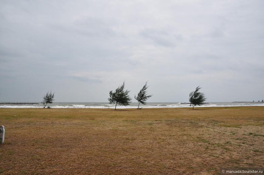 Казуарины – это такие красивые деревья, с виду похожие на сосны, но растут они только в тропических странах ЮВА, в Австралии и Океании. Казуариновая роща в этом месте  частично является искусственным насаждением.