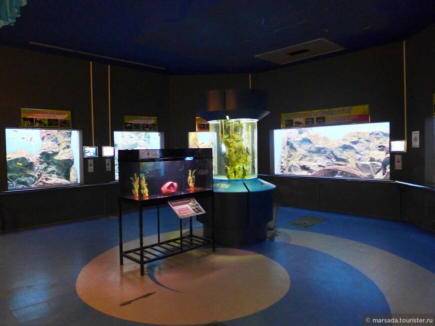 На стендах можно прочесть про происхождение рыб, их особенности питания, размножения