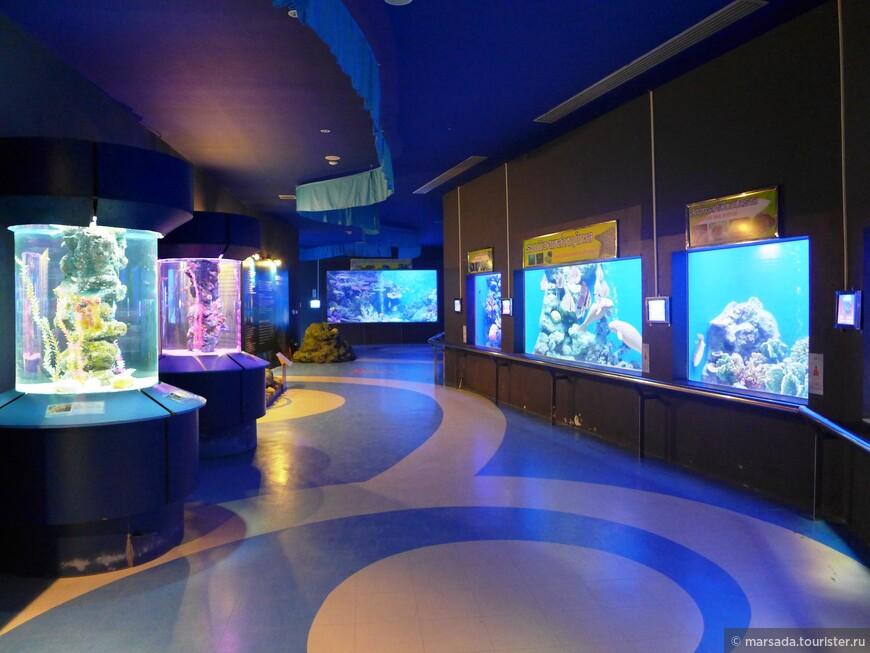 Вообще аквариум довольно большой, мы даже после него не пошли в Бангкокский, ибо один из нашей компании был там раньше, и сказал, что размах тот же, но в бангкоке это стоит около 1000 бат, а тут 20