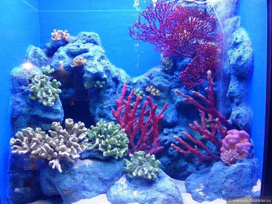 Целый зал с разнообразными кораллами