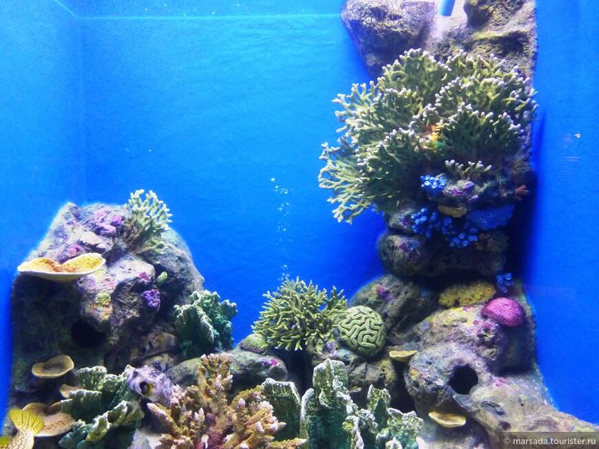 Вот скажите, зачем кораллам на дне морском такая красивая яркая окраска, а?