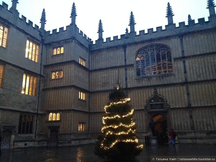 Прогулка пришлась на середину декабря и рождественская ёлочка уже стояла парадно у главного входа в Библиотеку Бодлеан. Украшает. Правда?!