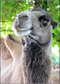 Один из лучших частных зоопарков!