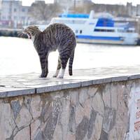И куда нам деться от ленивых морских котов?