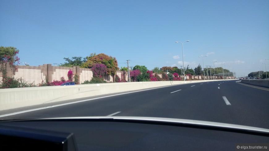 Дороги, дороги...ну что говорить, они практически идеальны в Израиле. Крупные развязки, несколько полос движения. Очень интересно: у каждой полосы на перекрестке свой светофор. Очень организованно и продумано! Никто не лезет на чужие полосы, не подрезает. Но пробки все равно есть, и бибикают водители громко и долго.