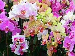 В Вологде откроют музей орхидей