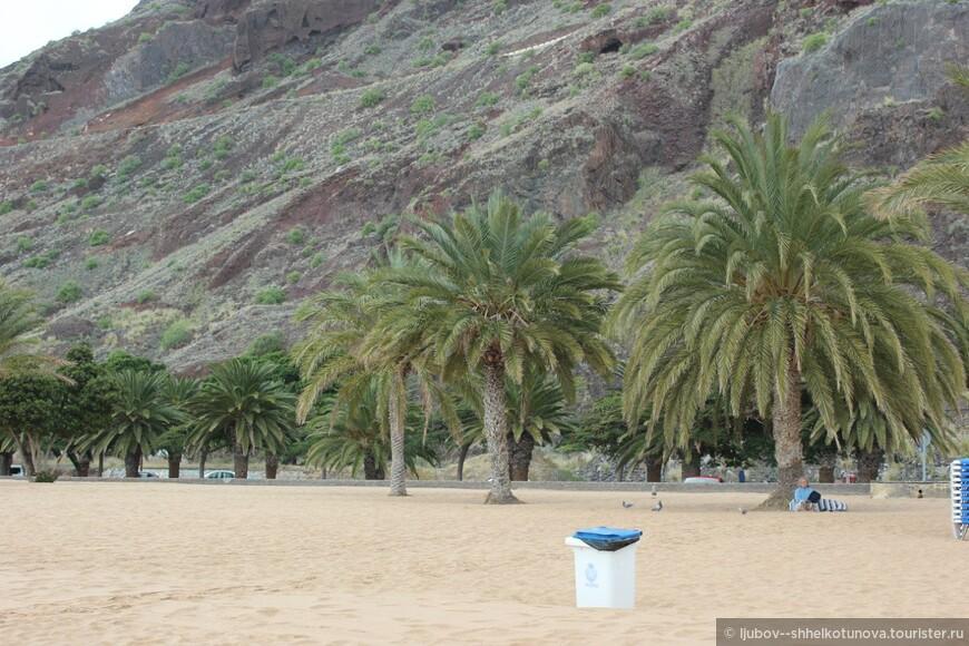Пальмы которыми окантован пляж Playa de las Teresitas,.