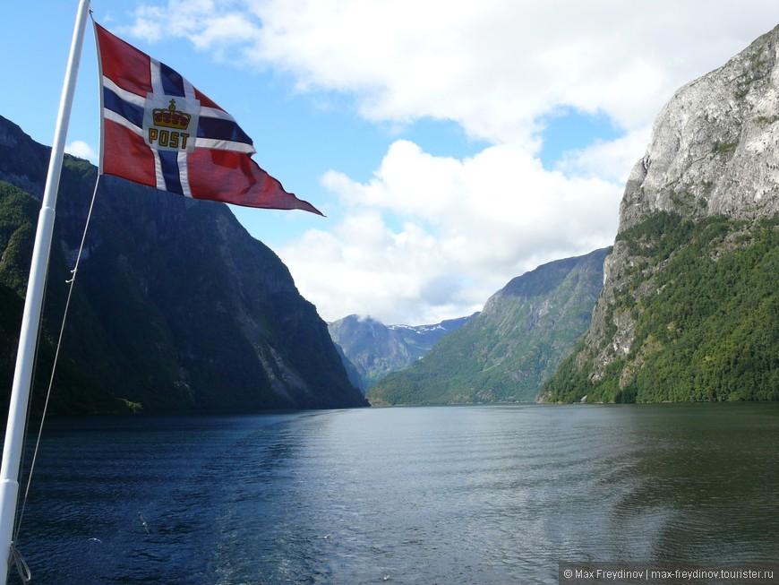 сюда из северной атлантики заплывают дельфины, касатки и даже киты