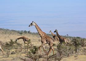 Моя Африка! Первые впечатления!