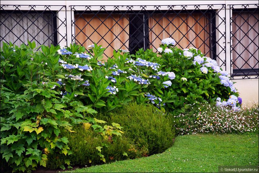 Очень много вот таких голубых цветов.