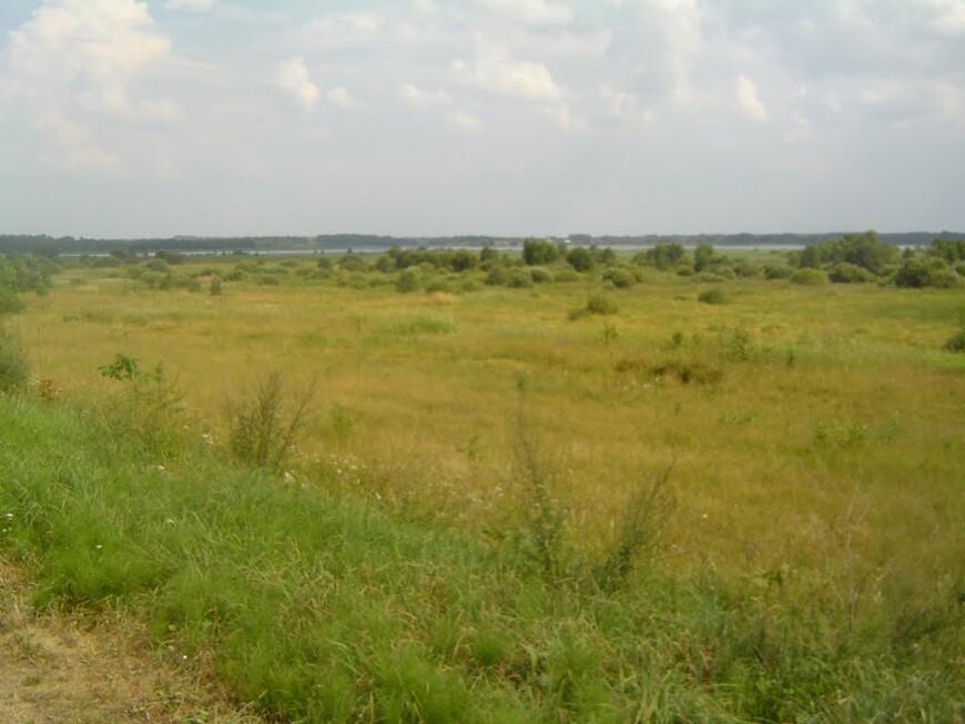Вид с Яновщины на Селяву