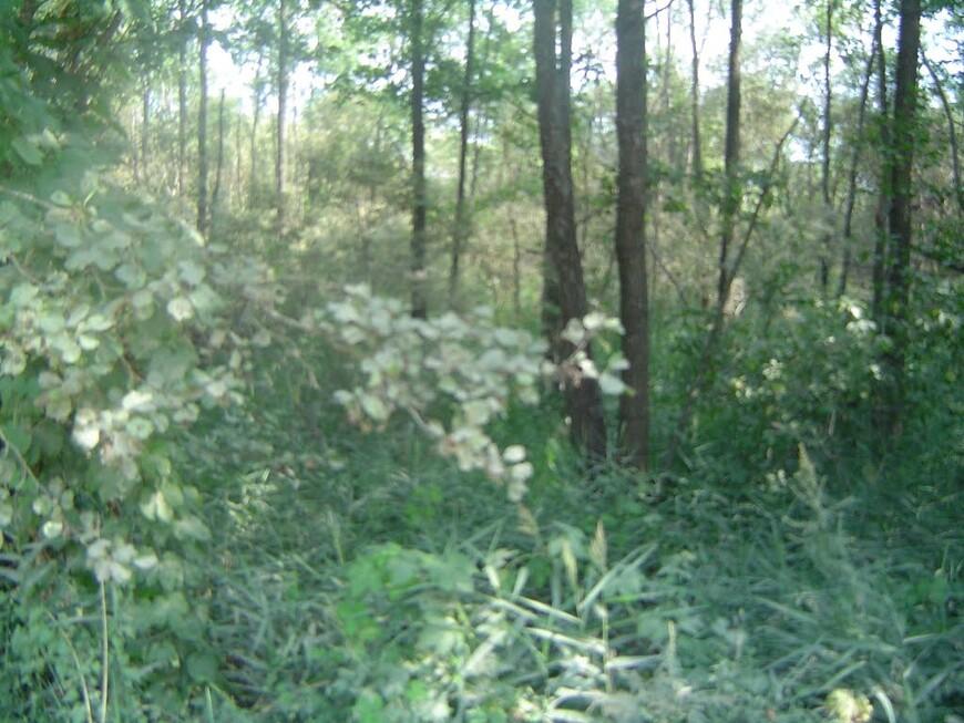 Небольшой лес между гравийкой и озером