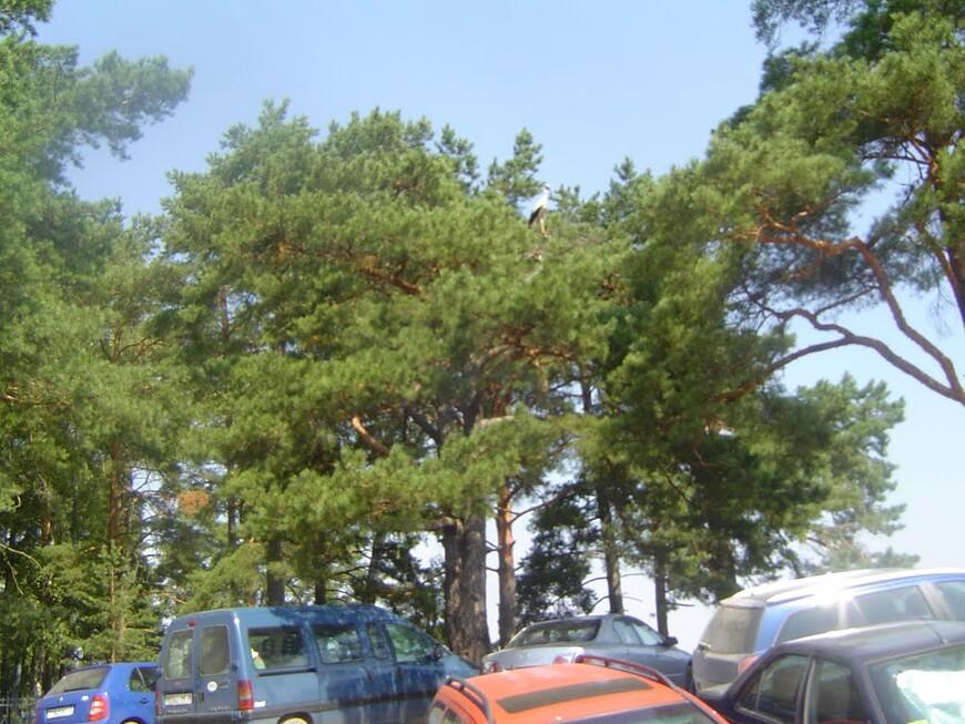 Припаркованные автомобили, кладбище и аист на дереве