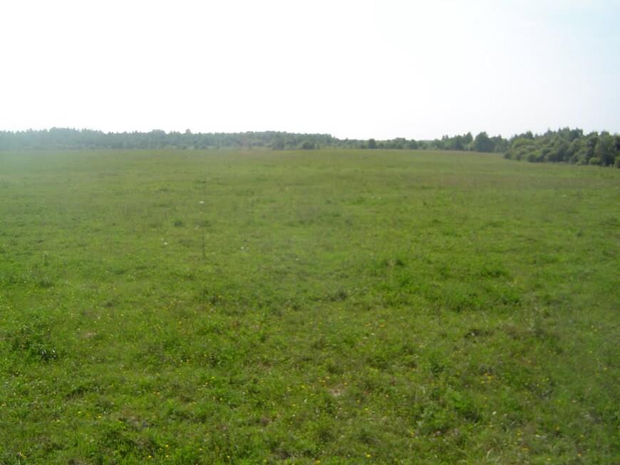 Лужайка и лес