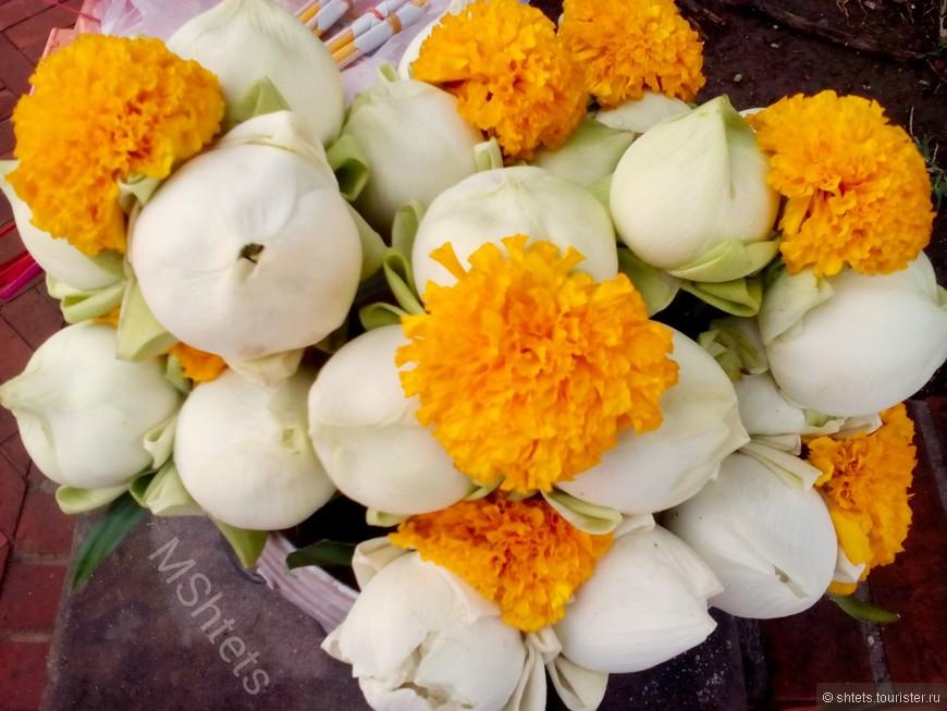Цветы лотоса, Аютайя