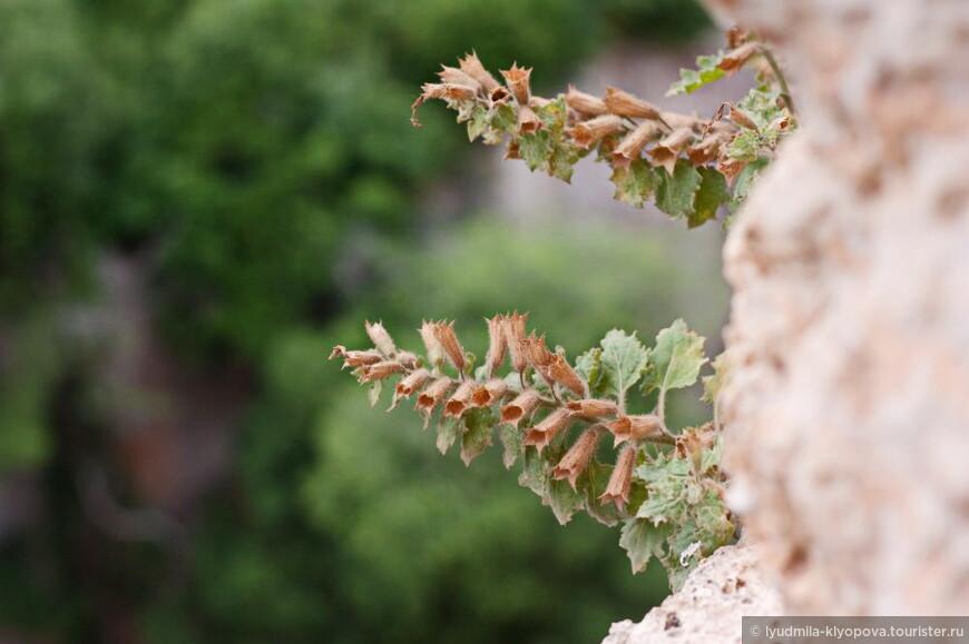 Древние стены поросли цветами и даже небольшими деревцами.