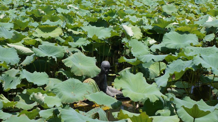 В густых зарослях лотоса затерялся застенчивый купальщик.
