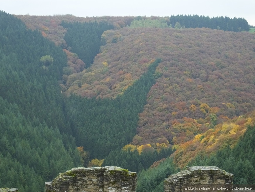 Интересное природное художество, хвойный вечнозеленый лес вторгается в лиственную красно-желтую окраску