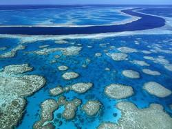 Большой Барьерный риф под угрозой исчезновения