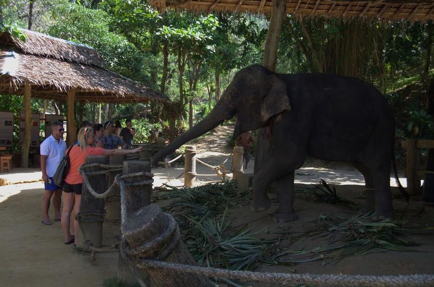 Ну как же не посетить этих милых животных, находясь в Таиланде...  Kok Chang Safari Elephant Trekking - считается одной из самых красивых ферм слонов на острове.