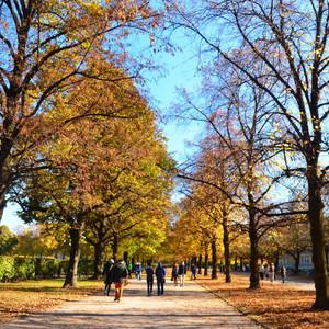 Осенний день в Мюнхене